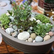 Indoor Rock Garden Ideas Untitled Gardens Garden Ideas And Plants