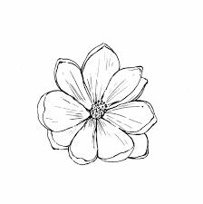 plants native to new england magnolia virginiana sweet bay go botany