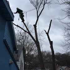 tree services of omaha 25 photos tree services 7711
