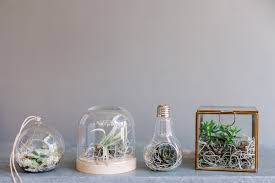 making a terrarium containers with easy u2013 outdoor decorations