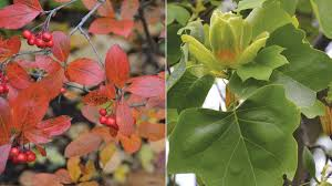 plants native to illinois new guide helps identify native trees shrubs for your garden