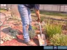 how to propagate ornamental grasses how to dig up ornamental