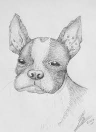 boston terrier sketch by imkilljoy on deviantart