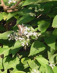 native plants that attract butterflies plant lists forest garden