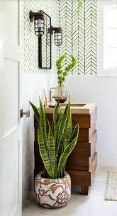 plante pour cuisine plante pour cuisine sombre photos de design d intérieur et