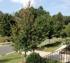 buying foreclosed homes in the palisades homes for sale gastonia