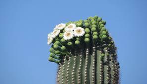 arizona flowers flowers that do well in arizona heat garden guides