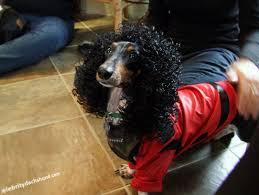 michael jackson halloween costume superdog photo contest u0026 dachshund halloween costumes hallowiener