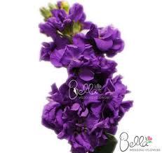 Violet Wedding Flowers - 17 best purple wedding flowers images on pinterest purple