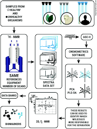 nmr based metabolomics strategies plants animals and humans