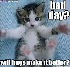 Cat Hug Meme - 18 adorable kitties who love a hug hug memes and kitty