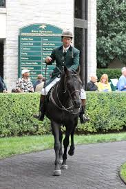 Kentucky how far can a horse travel in a day images 39 best keenelandstyle images gift shops kentucky jpg