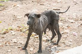 skin disease in dogs symptoms causes diagnosis treatment