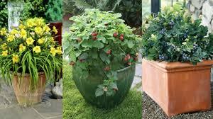 perennial garden vegetables how to plant a perennial food garden 20 fruits u0026 veggies that will