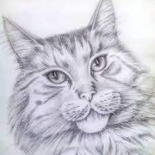 imagenes a lapiz de gatos dibujo de lápiz un gato hermoso con los ojos hermosos foto de