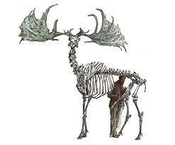of deer elk and moose antlers nature and environment mother