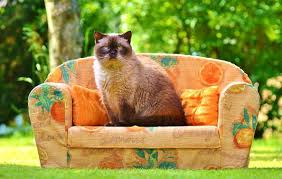 gatti divani istruzioni per riparare un divano in pelle dai graffi gatto