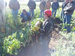 farming smarter with cover crops the farmer u0027s life