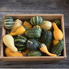 ornamental gourds small mixed gourd seed johnny s selected seeds
