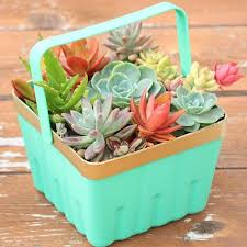 a little more succulent action for you find out how i transformed