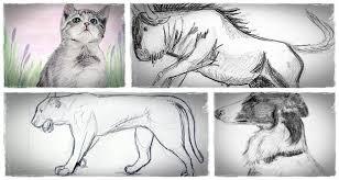 how to sketch animals u201cdrawing animals in pencil u201d helps people