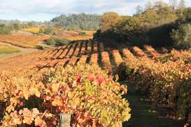 sierra foothills wineries fall colors lure visitors sierra