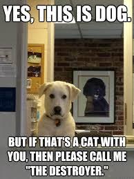 Dog At Vet Meme - evil vet dog memes quickmeme