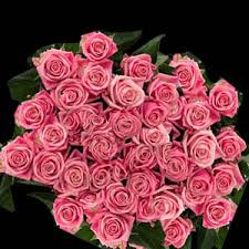 wholesale roses allways4you wholesale roses