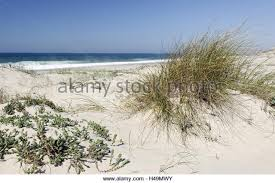 Wisconsin vegetaion images Sand dune vegetation stock photos sand dune vegetation stock jpg