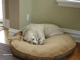 Light Brown Laminate Flooring Contemporary Costco Kirkland Dog Bed Ideas With Round Light Brown