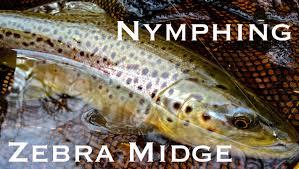 zebra midge pattern w4f fly fishing nymphing with a zebra midge youtube