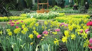 flowers vase still petals flowers love gerberas life nature woith