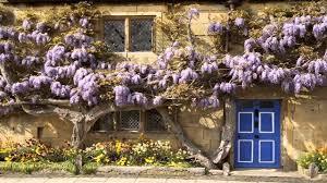 wisteria home decor artificial vine artificial rattan wedding vine flower wedding