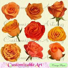 orange roses orange clipart digital orange roses clip images light