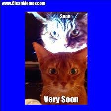 Soon Cat Meme - cat memes page 27 clean memes