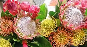 Hawaiian Flowers And Plants - tropical flowers from maui hawaii have a nice day