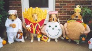 36 genius halloween costumes for dogs hexjam