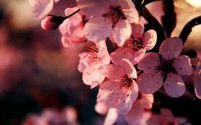 beautiful flower wallpapers 25400 1920x1200 px hdwallsource com