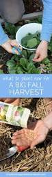 what to plant now for great fall harvests harvest foods