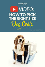 how to choose the right size dog crate detailed guide u0026 video