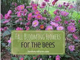 fall blooming flowers for the bees tenth acre farm