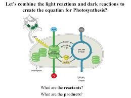 The Light Reactions Of Photosynthesis Use And Produce Photosynthesis And Cell Respiration Ppt Download