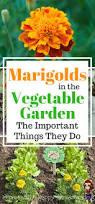 Decorative Vegetable Garden by 25 Best Edible Garden Ideas On Pinterest Plants By Post