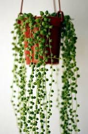 make your own hanging l peculiar plants to try if you re tired of boring home gardens