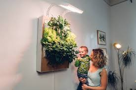 meet herbert the vertical hydroponic wall garden walled garden