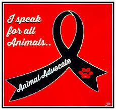 belgian sheepdog craigslist stop craigslist from advertising animals causes