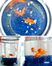 Goldfish In A Vase Improving Your Life With Feng Shui Or Why I Bought Goldfish
