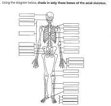 axial skeleton worksheet best 25 axial skeleton ideas on pinterest