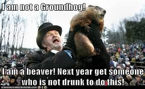 Groundhog Meme - i can has cheezburger groundhog funny animals online
