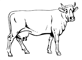 modest cow coloring pages top coloring ideas 1347 unknown